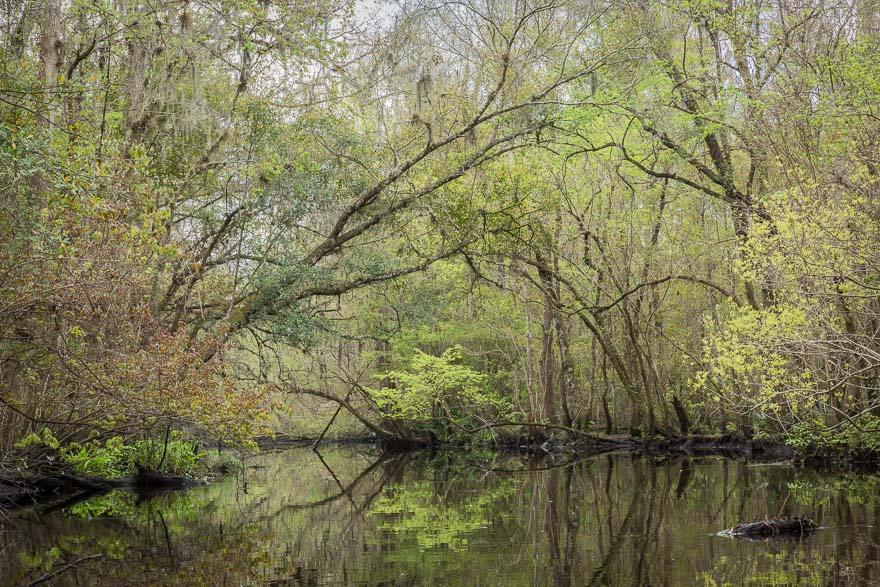 Spring Greens - Deep Creek