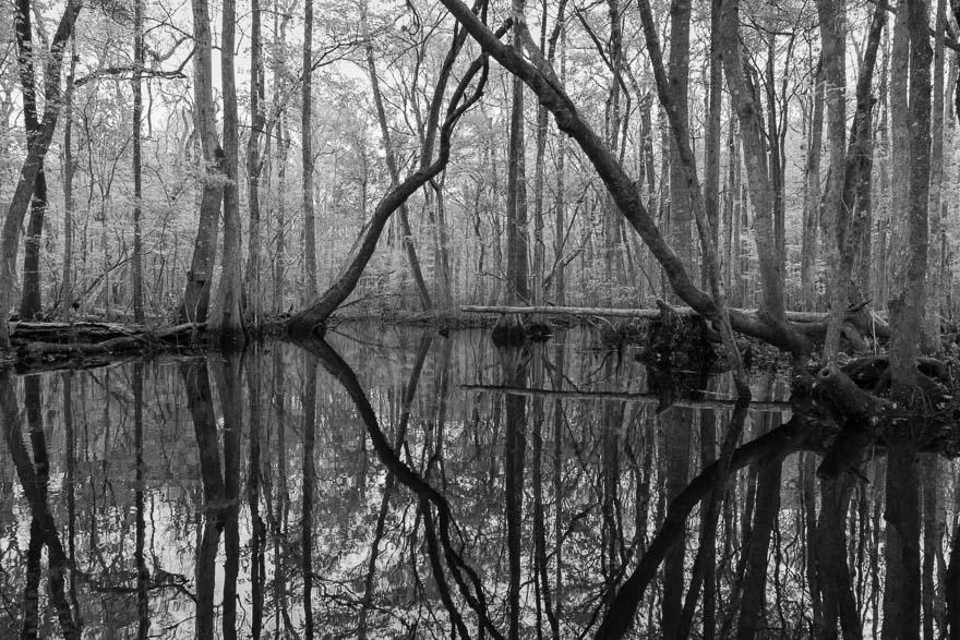 Connection - Durbin Creek