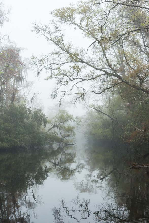 Foggy Passage - Thomas Creek