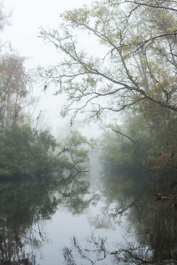 Foggy Passage - Thomas Creek