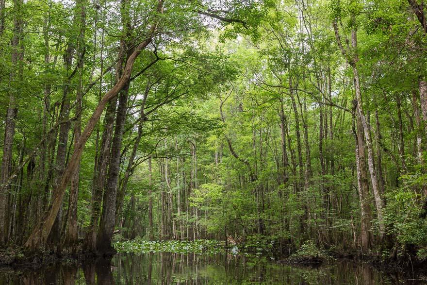 Almost Summer - Durbin Creek
