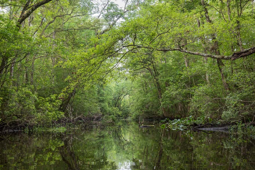 Low Water - Julington Creek