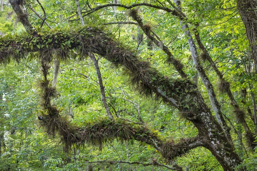 Life on a Limb - Julington Creek